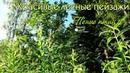 Красивый летний лес и Пение птиц! Волшебная природа для души! Красивые лесные пейзажи...