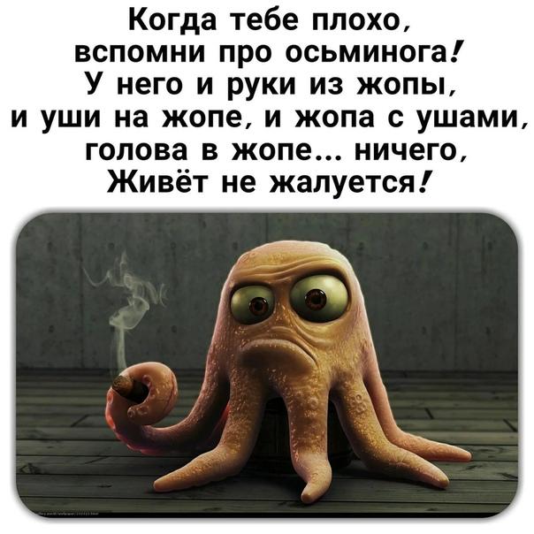 Если тебе грустно вспомни осьминога картинки