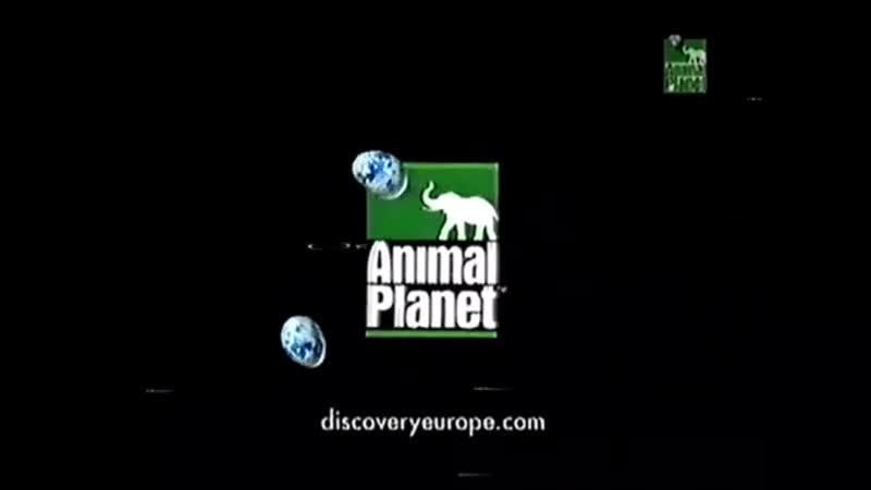Мини заставка канала Animal Planet 2000 2004 г 4