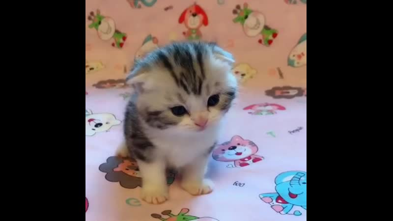 Y2mate.com - purrfectly_beautiful_kittens_7flTGCT259o_1080p.mp4