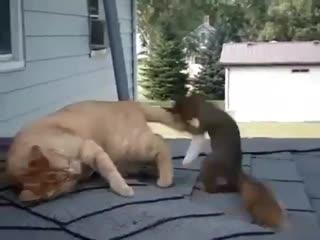 Cat and squirrel