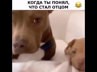 Животные GIF