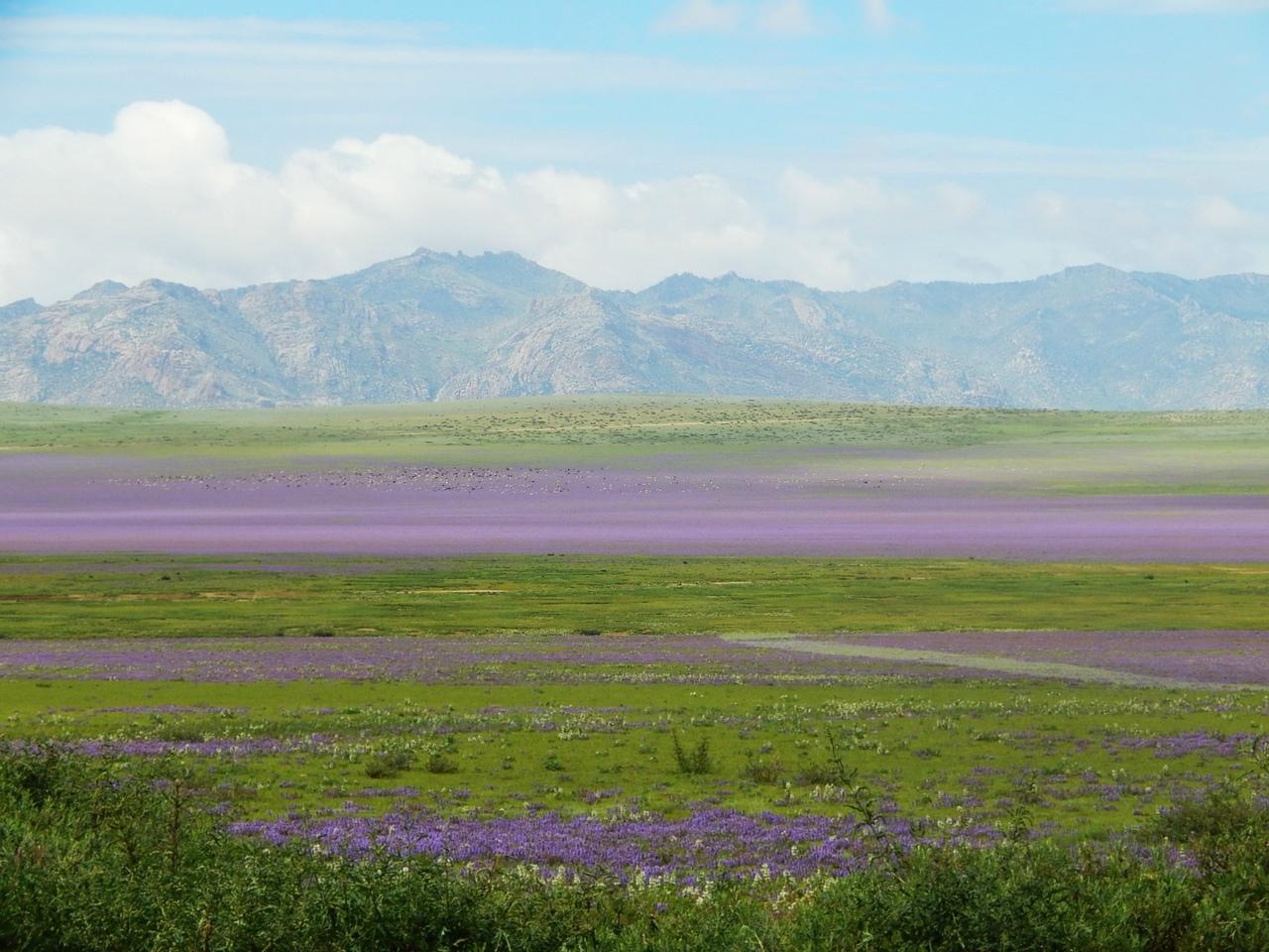 Июльская Монголия. По пути из Улан-Батора в Хархорин .