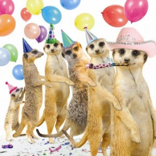 вошли фото поздравительные с днем рождения прикольные остальными