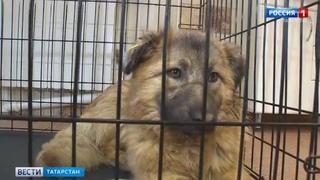 В Казани спасли собаку, которую пытались убить из арбалета