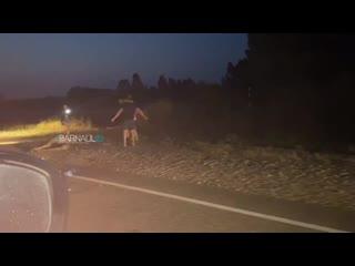 Сбили лося на Р-256 (Barnaul 22)
