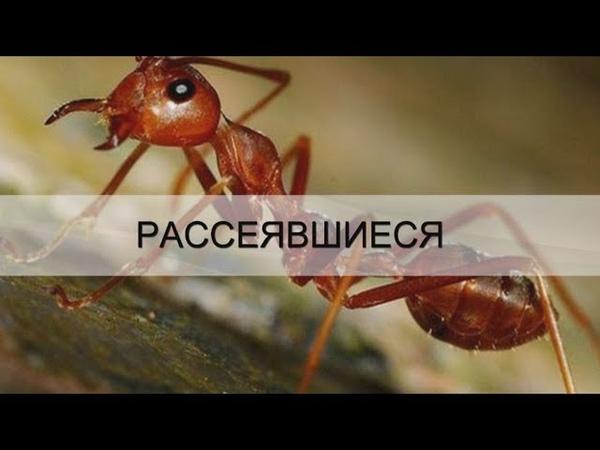 РАССЕЯВШИЕСЯ г Ивано Франковск Андрей Яковишин