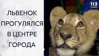 В Харькове в центре города возле главной елки разгуливал львенок