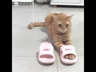Slippers - домашние тапочки