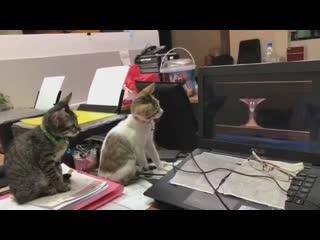 Котята смотрят мультфильм