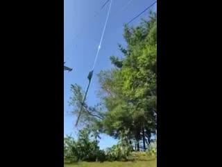 Задача: спилить деревья, чтобы не доставали до ЛЭП