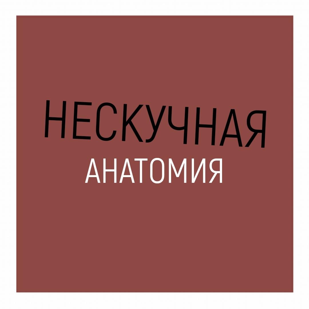 Афиша Нескучная анатомия