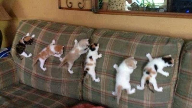 Anak Kucingnya Banyak Banget Ada Yang Mau
