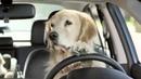 Субару с собакой - реклама