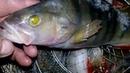 Рыбалка на Окуня на озере Чаглы