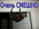 Смешные видео про котиков 2020 / Самая смешная подборка про котов смеялся до слез. Коты и кошки 2020
