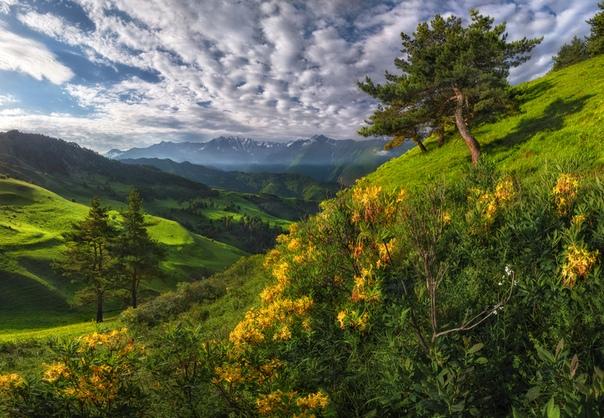 Цветы Ингушетии