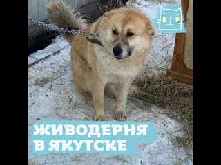 Массовое убийство животных в якутском пункте передержки