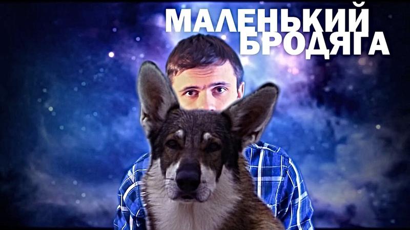 ТРАВА ЗЕЛЕНЕЕ 6 МАЛЕНЬКИЙ БРОДЯГА The Littlest Hobo Обзор сериала