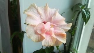 Топ 10 моих самых красивых и неприхотливых комнатных растений в марте