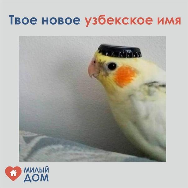 камаро картинка твое имя на узбекском думали продать