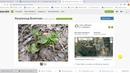 Фотографии на пользу науке: используем платформу iNaturalist с компьютера