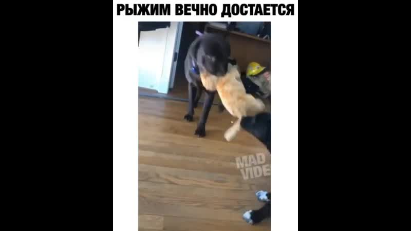 Mad_video_20200401_002926_0.mp4