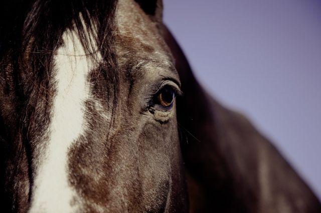 В КЧР лошадь оказалась под колесами авто на ночной трассе