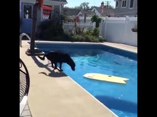 Mr.b funny dog