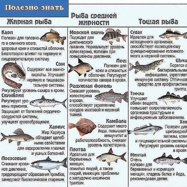 Какую речную рыбу можно есть при диете
