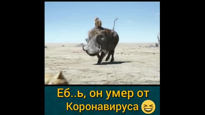 ТИМОН И ПУМБА mp4