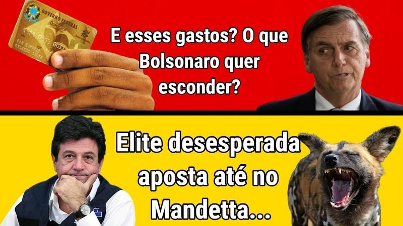 Desesperada a elite aposta no Mandetta Gatos com cartão corporativo volta a aterrorizar Bolsonaro