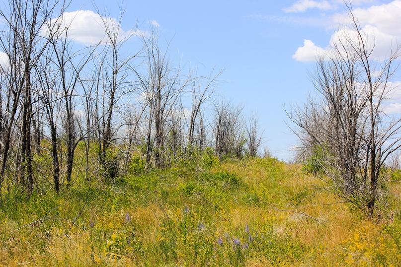 Экспедиционная оценка эффективности землепользования в Оренбуржье, изображение №11