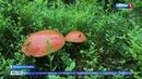 В Пинежских лесах начался грибной сезон