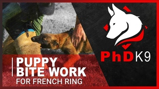 Puppy Bite Work for French Ring Protection Sport with Bethany Preud'homme from PhD K9