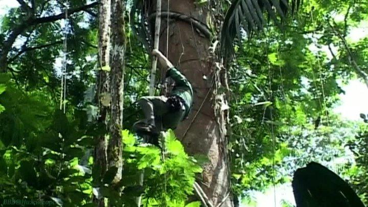 BBC Жизнь млекопитающих 8 Жизнь на деревьях
