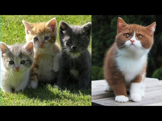 Super cute kittens || Worlds most Cute and Funny Kittens || Part 1