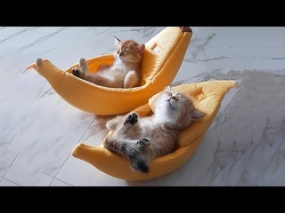 AWW CUTEST baby animals Videos Compilation cutest moments of animals - Cutest Kittens #14