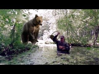 Спасаясь от медведя, болото было последней надеждой, но зверь повел себя не так, как ожидал человек