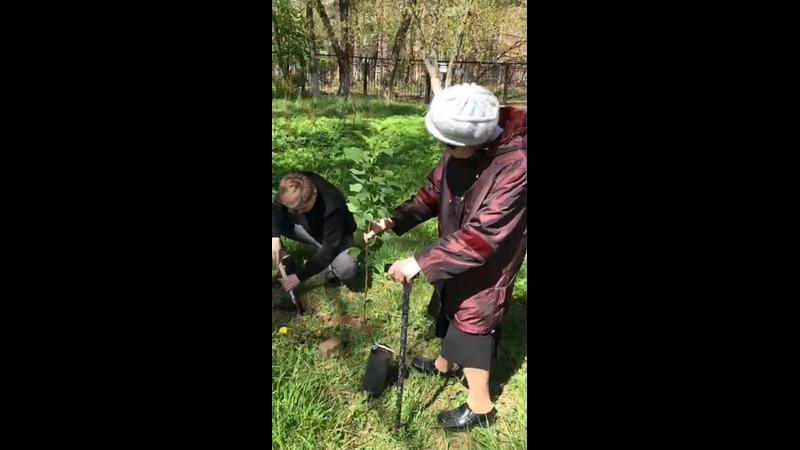 Директор сажает деревья с проживающими