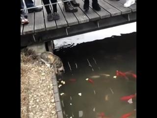 Подошел, опустил лапку, и вот она - рыба! Все б так рыбачили)