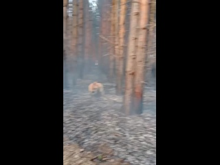 Горит рядом с деревней Петрово.  Люди, если вы люди, зачем вы жжете лес??? Я бы расстреляла поджигателя..