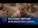 Бэби-бум в Новосибирском зоопарке малышей выводят в свет