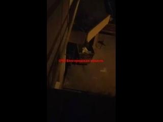 Белгород. Полуголая девушка в неадекватном состоянии избила мужчину и собственную бабушку