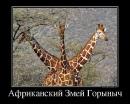 Персональный фотоальбом Roman Bakalkin
