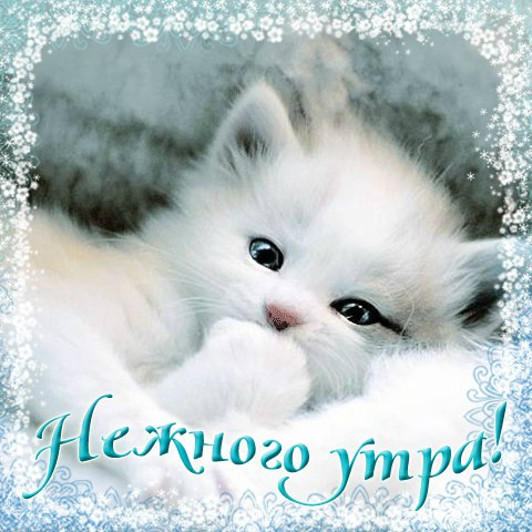 фото из альбома Елены Савченко №3