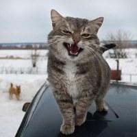 Личная фотография Егора Ложкина