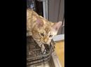 Обормот против посудомойки