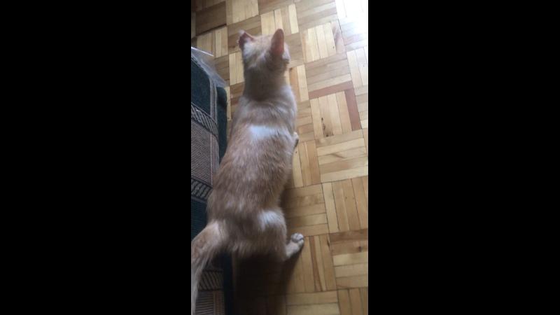 Видео от Помощь коту Лину