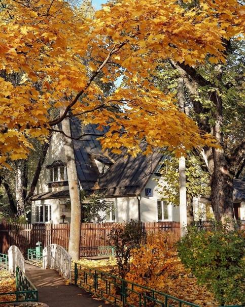 Золотая осень в Посёлке Художников🍁🍂🤩Фото от 📸chto...
